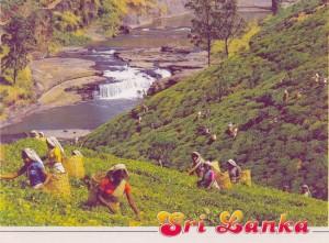1 Teelandschaft