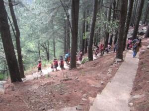 2. durch den Wald laufen